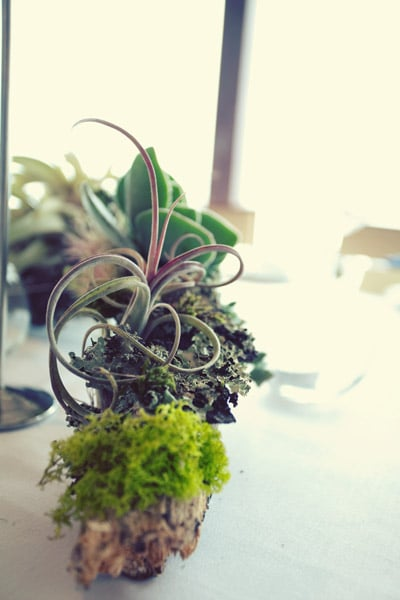 Dùng hoa khô trang trí 01